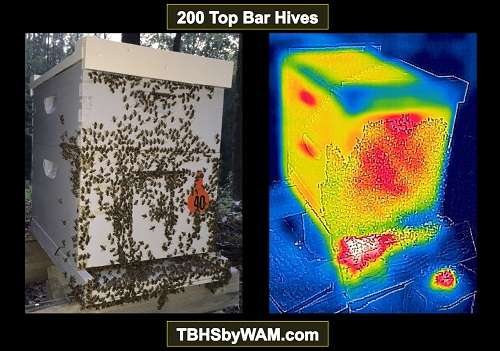 thermal image_hive